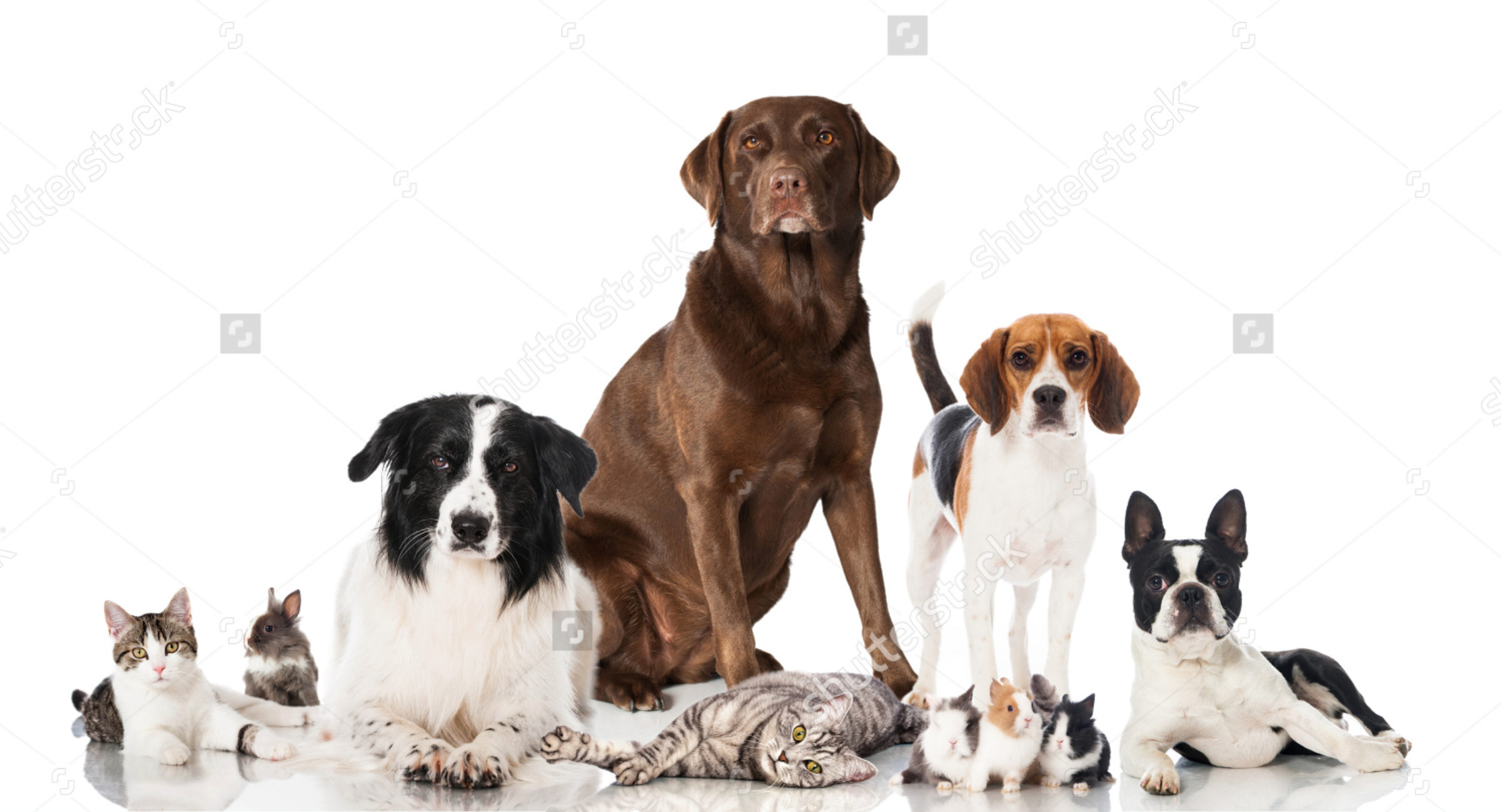 cropped-stock-photo-group-of-pets-169168619.jpg